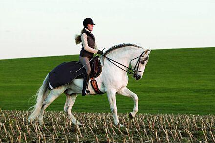 Horseware Amigo Competition Sheet Navy/White
