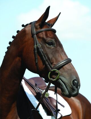 Collegiate Syntovia+ Padded Raised Cavesson Bridle Brown