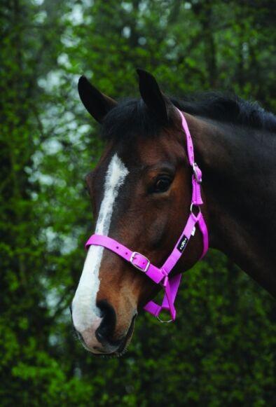 Saxon Economy Headcollar Pink