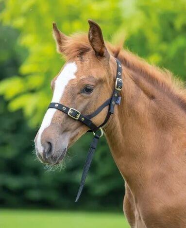 Shires Foal Slip