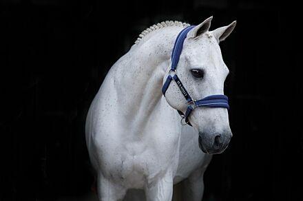 Horseware Rambo Padded Head Collar Royal Blue