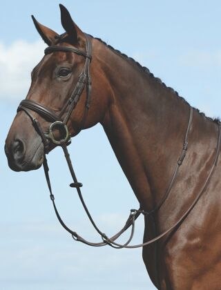 Collegiate Syntovia+ Plain Flat Running Martingale Brown