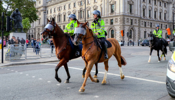 The Police Horse