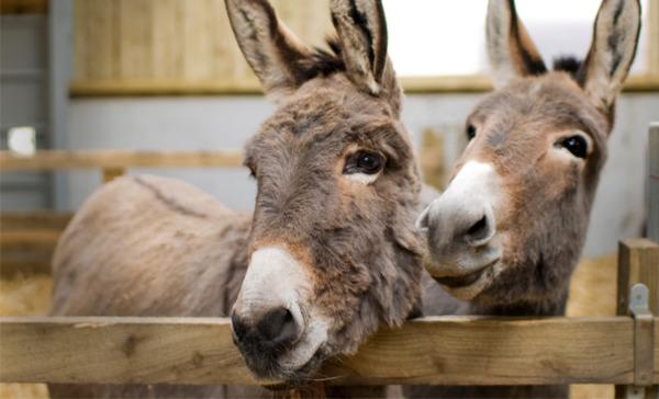 The Flicka Foundation Donkey Sanctuary