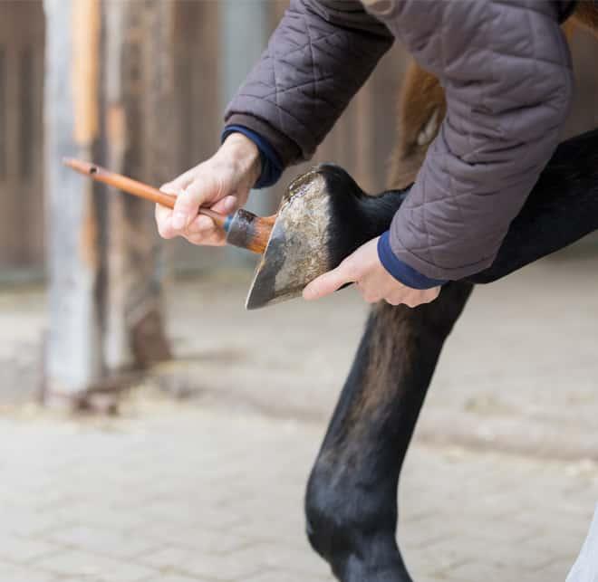 Horse Care cta